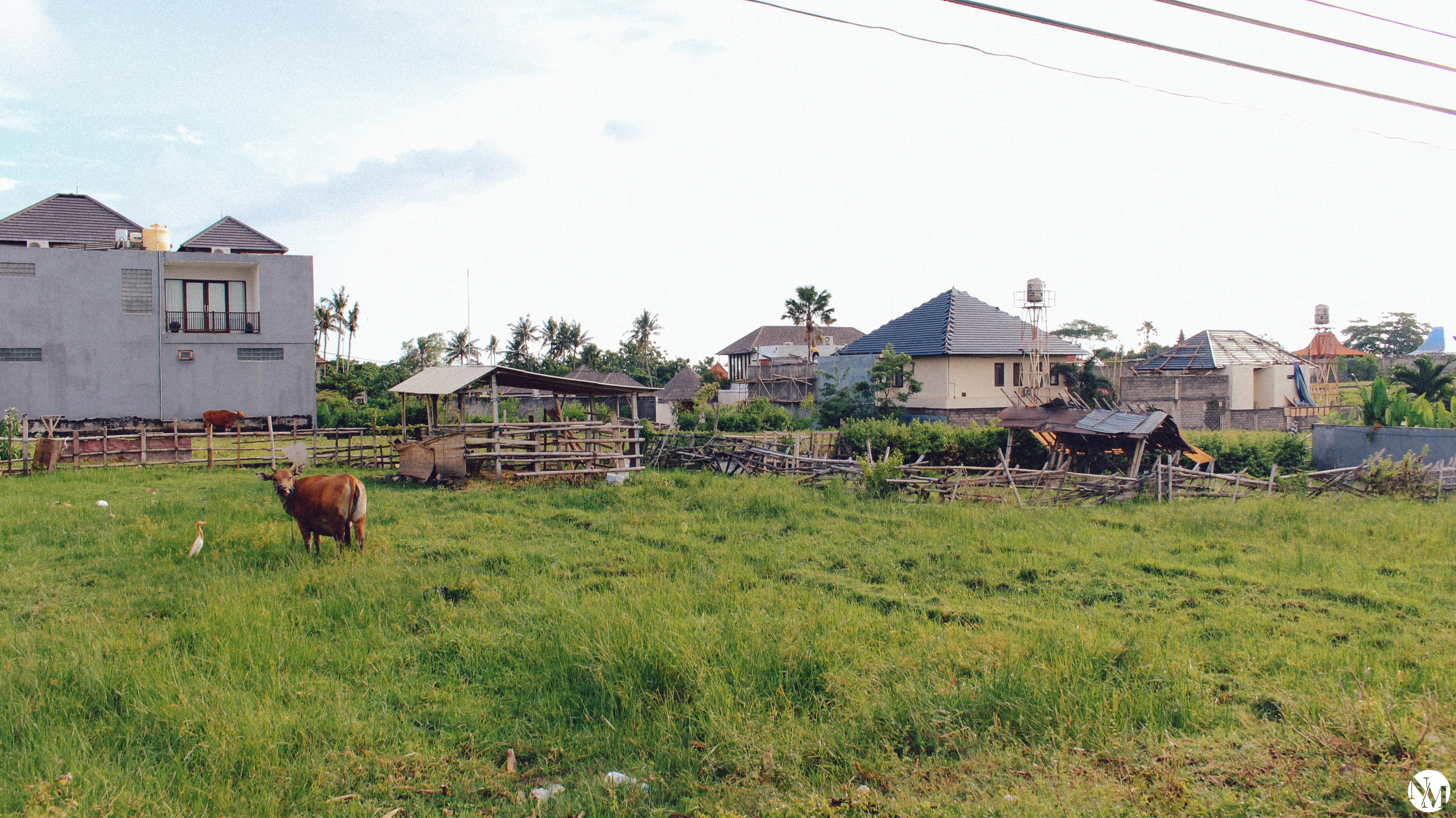 Canggu Bali Travel Guide by Noni May-37