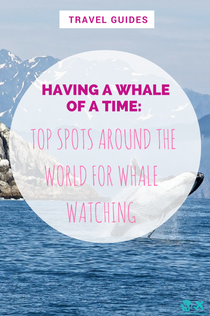 Having a whale of a time: Top spots around the world for whale watching