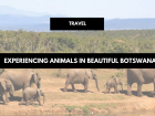 Experiencing Animals in Beautiful Botswana