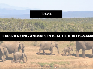 Experiencing Animals in Beautiful Botswana